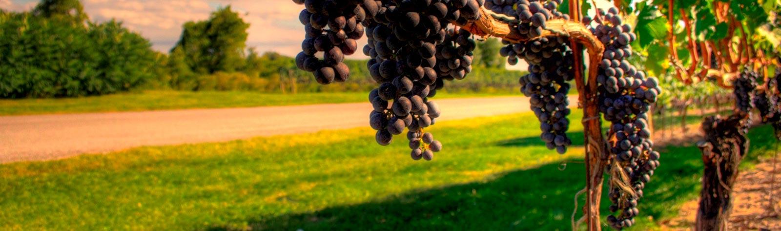 Wine Tours Belvedere